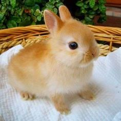 Animals 319755642296804562 - Via Please PM for credit. 😻🤤🐶🐱🐭🐹🐰🦊 *Ces animaux sont tellement adorables* Source by sdiverspub Baby Animals Super Cute, Cute Baby Bunnies, Cute Little Animals, Cute Funny Animals, Cute Cats, Cute Bunny Pictures, Baby Animals Pictures, Fluffy Animals, Cute Creatures