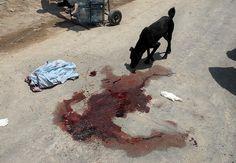 #death, #dog