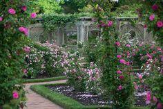 Summer arrives in #Biltmore's rose garden in Asheville, NC.