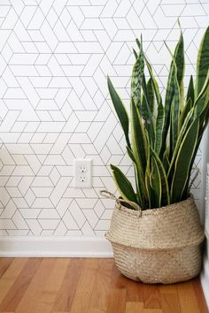 Modern Wallpaper with Snake Plant in BasketYou can find Wallpaper accent wall and more on our website.Modern Wallpaper with Snake Plant in Basket Wallpaper Decor, Room Wallpaper, Wallpaper Accent Wall Bathroom, Living Room Decor, Wall Wallpaper, Bathroom Wallpaper, Wallpaper Living Room, Plant Wallpaper, Hallway Wallpaper