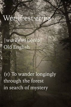 Werifesteria [Old English] ~ (v.) to wander longingly through the forest in search of mystery.