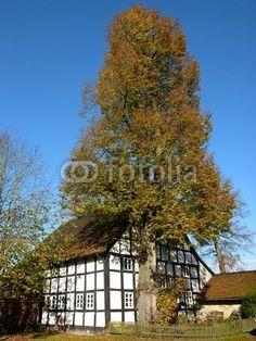 Fachwerkhaus und alter Baum am Bartholdskrug in Lipperreihe bei Bielefeld im Teutoburger Wald in Ostwestfalen-Lippe