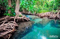 สระมรกต จ.กระบี่ (Photo : คู่หูเดินทาง) Krabi