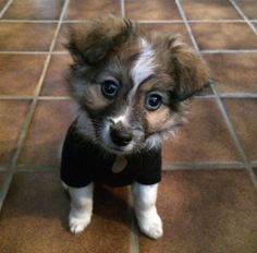 My Friend's New Puppy | Cutest Paw