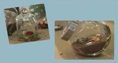 How to make a mini terrarium