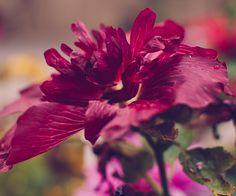 Flowers + bugs