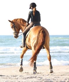equestrian equine cheval pferde caballo | chestnut dressage water on beach rearview