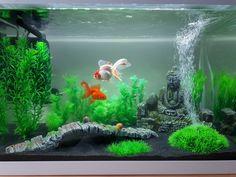 Oranda Goldfish, Goldfish Aquarium, Goldfish Tank, Aquarium Fish Tank, Aquarium Ideas, Aquarium Design, Aquarium Setup, Fish Tank Themes, Fish Tank Terrarium