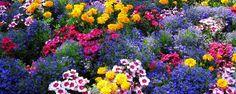 Jardim saudável na primavera - Dicas de como mantê-lo Para comemorar a chegada da estação das flores, a galera doCiclo Vivoseparou algumas dicas de como manter um jardim saudável, mesmo que seja em ambientespequenos, como apartamentos. São dicas práticas e super eficientes para uma primavera ainda mais florida.    A me... - http://www.pisoecologico.com.br/ecoblog/2016/10/27/jardim-saudavel-na-primavera/