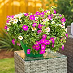 pink and yellow petunias on outdoor tabletop