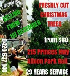 Fresh cut Christmas trees varied sizes available  | Other Community | Gumtree Australia Shellharbour Area - Albion Park Rail | 1167199636