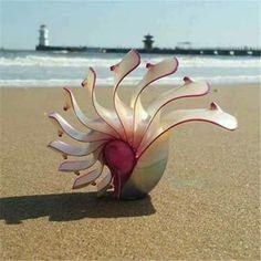 Beautiful Conch Shell
