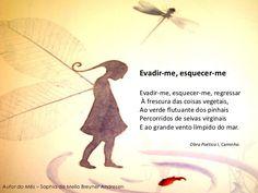 sophia de mello breyner - Google Search