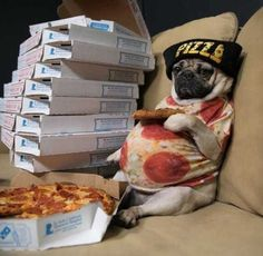 pizza pug and chill - Meme Collection Super Cute Puppies, Cute Baby Dogs, Baby Pugs, Silly Dogs, Cute Little Puppies, Cute Dogs And Puppies, Cute Little Animals, Funny Animal Jokes, Funny Animal Photos