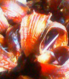 Goodgrubbs > Dried Fish (2)