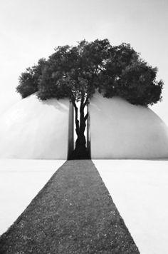 Nature meets architecture