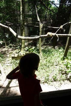 #zoo #Amazonie #Guyane #tournage #ArthurAutourDuMonde #découverte #voyage #faune