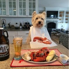 This is Friar, my Pesky's brother.. Please vote for him so we can show Cape Cod that Westies rule... thanks everyone..Voting ends August 10th, Just click on Friar the Westies face and he'll bring you to his page to vote.. takes less than 20 seconds.. Thanks