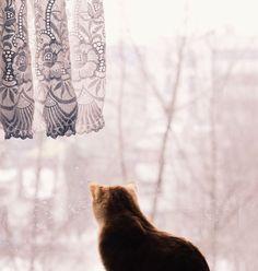 "↟Pattie↟ on Instagram: ""Kitty time ❤😻"""
