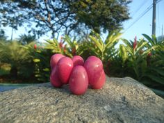 Think pink! Color up your life with this unique pink tagua bracelet.   #handmade #Ecuador #tagua #jewelry #villajewelry #vj #schmuck #joyas #