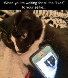 Funny Pictures For Today (#105)