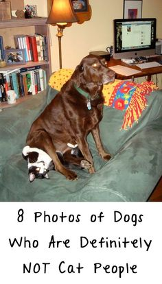 LOL, these are hilarious! http://theilovedogssite.com/something-tells-me-these-8-dogs-are-not-cat-people/
