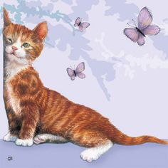 by Chrissie Snelling...... For not wanting this kitten, he sure wiggled his way in my heart! I miss him so!