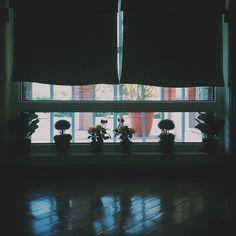 noir flowers