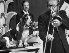The celebrity basset hound that charmed 1950s America