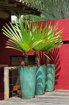 tropical plants in big planters by mable More