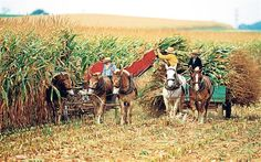 US holidays: among the Amish  Exploring Pennsylvania Dutch Country is like stepping back in time but, as Barbara Noe reports, the slower, technology-free life has its compensations.