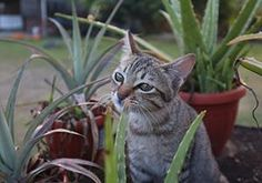 If You Have a Pet, Get Rid Of These Plants Immediately! - The Lost Herbs Backyard Plants, House Plants, Do Don T, Owning A Cat, Public Garden, Daffodils, Planting Flowers, Your Pet, Rid