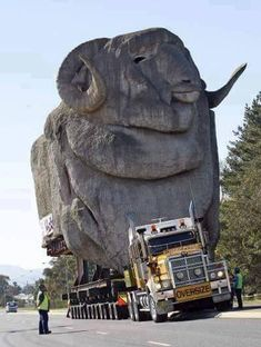 """Here we are, in New South Wales///Shearing Sheep as big as whales! The Big Merino on the move Goulburn New South Wales Big Rig Trucks, Cool Trucks, Semi Trucks, Engin, Heavy Machinery, Monster Trucks, Heavy Equipment, Logging Equipment, Transportation"