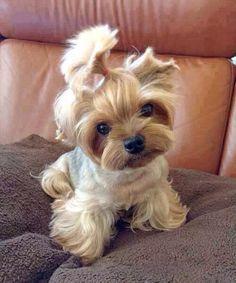 Awwwwwwww cute puppy