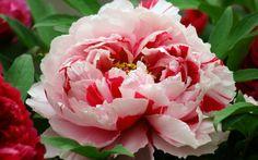 Garden Plant – 8 Gorgeous Classics For Your Garden Or Balcony ...