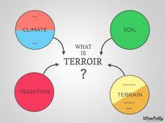 Terroir Definition for Wine