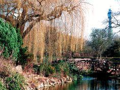 London #garden #quietcorner #color #trees