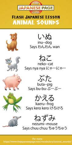 Animal Sounds in Japanese! Japanese Travel, Study Japanese, Japanese Culture, Learning Japanese, Learning Italian, Hiragana, Japanese Quotes, Japanese Phrases, Learn Japanese Words