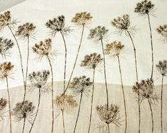 inleaf: queen anne's lace
