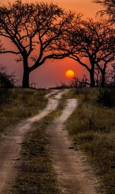 59 ideas nature landscape photography trees paths for 2019 Beautiful Sunset, Beautiful World, Beautiful Places, Beautiful Pictures, Kruger National Park, National Parks, Landscape Photography, Nature Photography, Photography Outfits