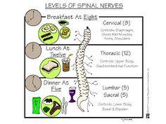 Nursing School: Medical Surgical Nursing Mnemonics - levels of spinal nerves Nursing School Notes, Nursing Career, Nursing Tips, Nursing Schools, Nursing Programs, Rn Programs, Nursing Assistant, Med Surg Nursing, Nursing Information