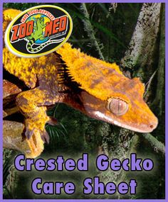 Check out Zoo Med's custom Care Sheet for Crested #Geckos. Find more Care Sheets available on our website.