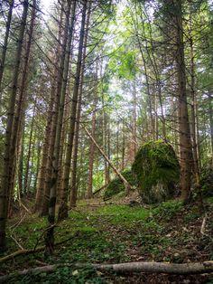 Von Goldau nach Sattel bin ich auf einer abwechslungsreichen Wanderung auf der dritten Etappe des Schwyzer Höhenweg unterwegs. Der Bus, Plants, Flims, Planters, Plant, Planting