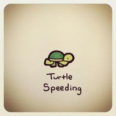 """2,294 Likes, 45 Comments - Turtle Wayne (@turtlewayne) on Instagram: """"Turtle Speeding"""""""