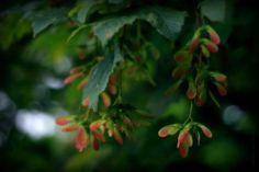 RAnDoM PatTerN : The Magic Sycamore tree