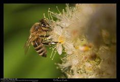 Canon & Csibu: Méhek Elsőre szögezzük le, ez nem egy összehasonlí...
