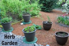 Container Herb Garden – Growing Basil, Sage, Parsley, Rosemary and Thyme