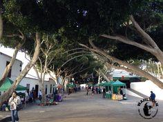 Lanzarote - Markt in Haria am Samstag