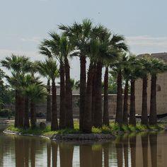 Jnane Sbile #garden in #Fez #Fes #Maroc #Morocco #travel #voyage #magazine #ipad #nowmaroc