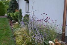 Ogród Mirelli - strona 556 - Forum ogrodnicze - Ogrodowisko